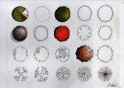 kurzy kreslení půdorys stromů